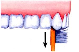 Zähne gründlich reinigen