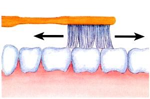 Putzen Sie die Zähne richtig