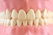 Zahnprothese Pflege